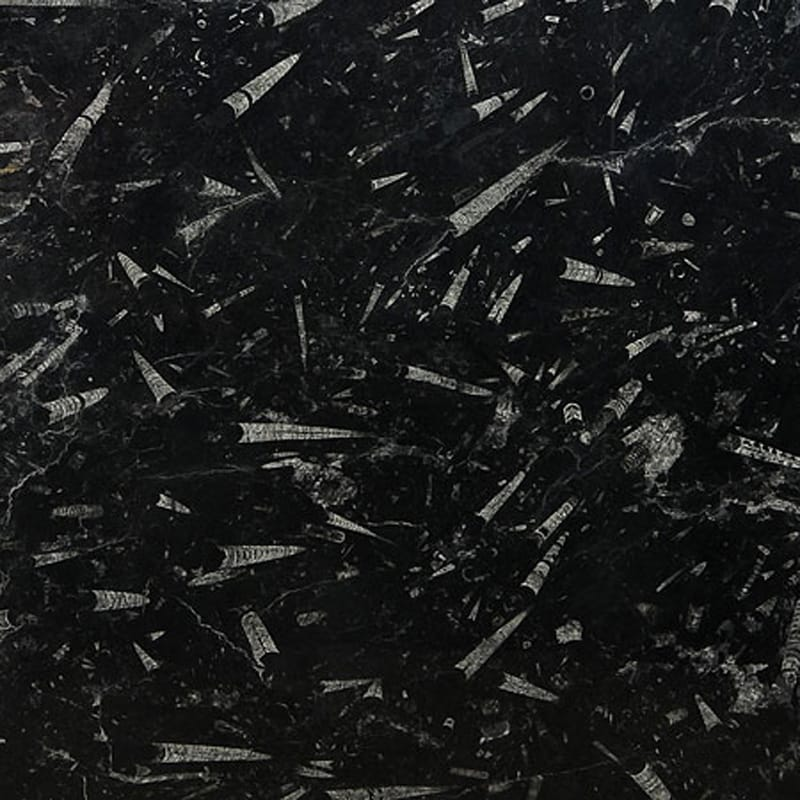 Fossil Black Polished Marble Slab Random 3/4