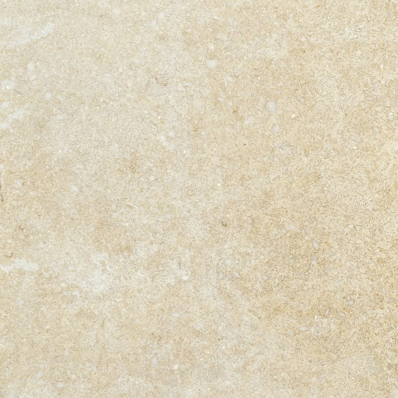 Seashell Honed Limestone Tiles 12x12