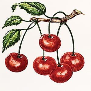 Cherries A Glossy Ceramic Tiles 4x4