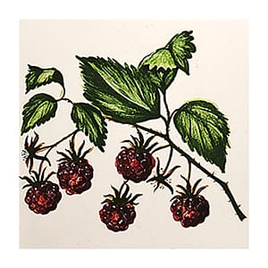 Raspberries A Glossy Ceramic Tiles 4x4