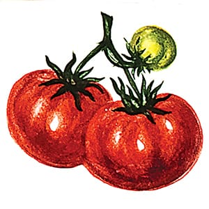 Vegetable Tomatoes A Glossy Ceramic Tiles 4x4