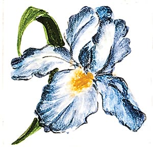 Flower Iris B Glossy Ceramic Tiles 4x4