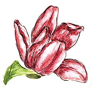Flower Tulip B Glossy Ceramic Tiles 4x4