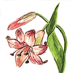 Flower Lily Glossy Ceramic Tiles 4x4