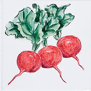 Vegetable Radishes Glossy Ceramic Tiles 4x4